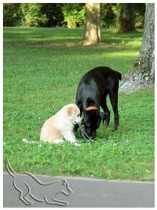dailydog - Täglich grüßt das Hundetier