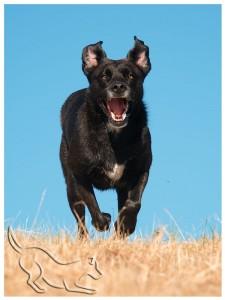 Strassenhund-Chica_Kontakt