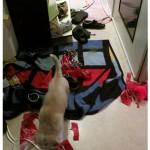 Schuhkasten, Chica & Sammy - hundetier.at