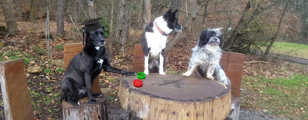 Hundekurs-Banner Hunde sitzen am Tisch