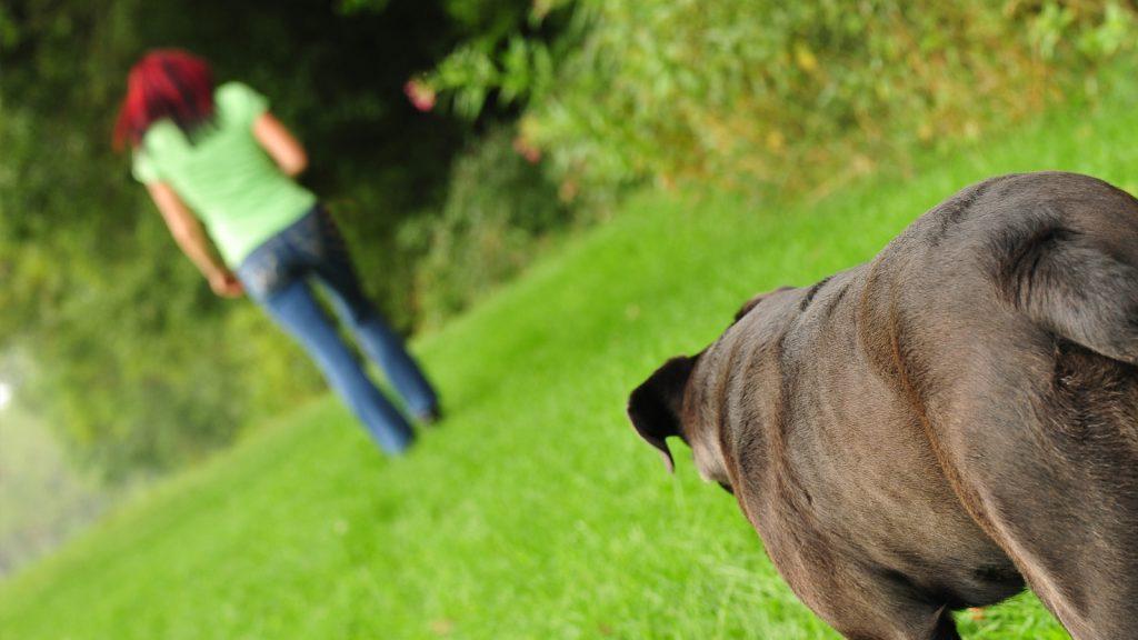 Hundehalter entfernt sich von schwarzen Hund