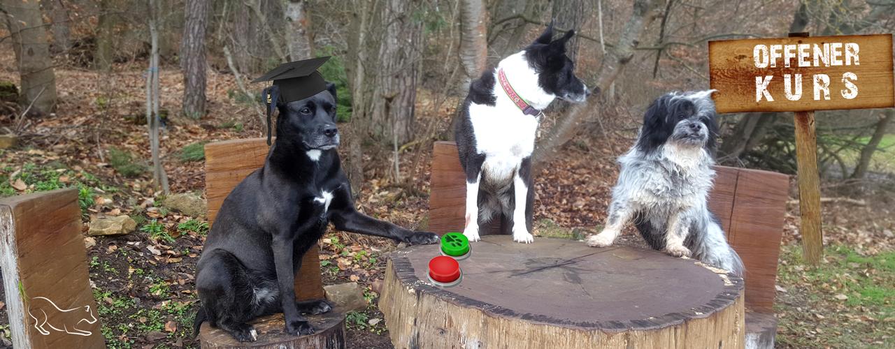 """Offener Hunde-Kurs """"Sehen & Verstehen"""" - Hunde sitzen an einen Tisch"""