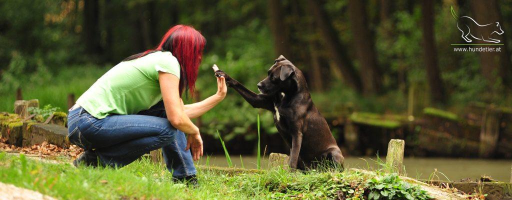 Mensch Hund Pfote Handschlag