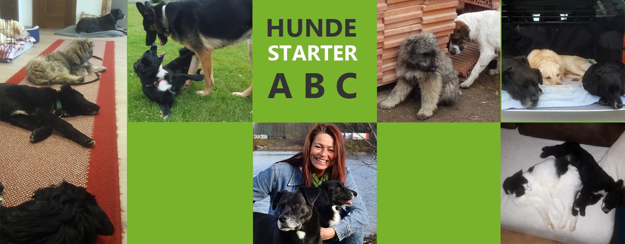 Viele Hunde und Hundetrainerin Michaela Huber